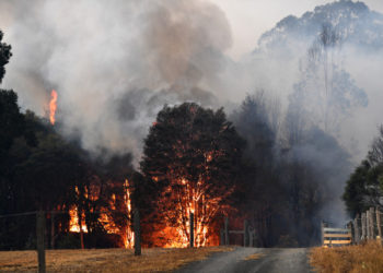 This picture taken on December 31, 2019 shows smoke and flames rising from burning trees as bushfires hit the area around the town of Nowra in the Australian state of New South Wales. - Fire-ravaged Australia has launched a major operation to reach thousands of people stranded in seaside towns after deadly bushfires ripped through popular tourist areas on New Year's Eve. (Photo by SAEED KHAN / AFP)