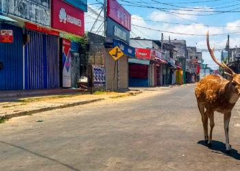 A wild deer, from a herd used to mingle with and be fed by the local population, roams in a deserted street during a government-imposed nationwide lockdown against the COVID-19 coronavirus, in the port city of Trincomalee on March 31, 2020. (Photo by STR / AFP)